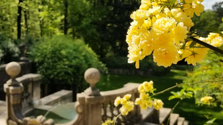 Swan House Gardens